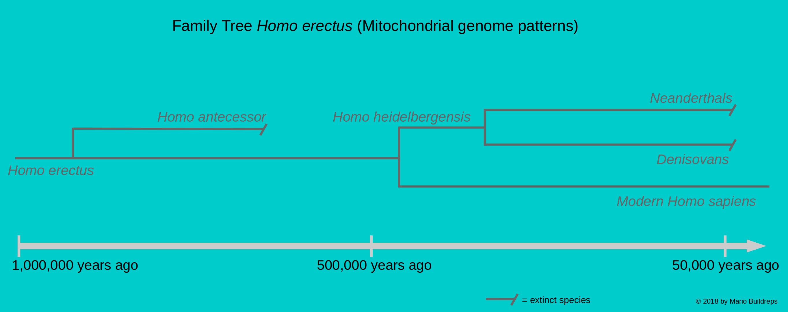 family-tree-homo-erectus-1-2308584-5046282